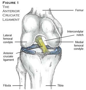 knee1